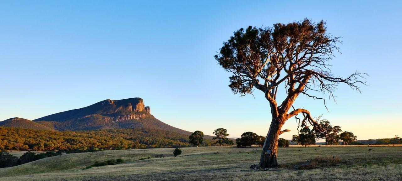 Early morning view of Mount Abrupt