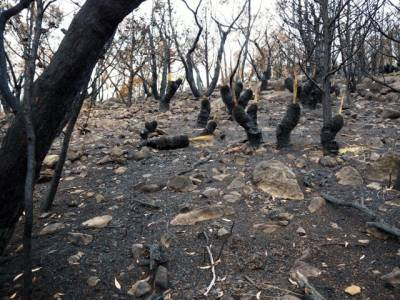 b2ap3_thumbnail_Oblitereated-forest-on-The-Piccaninny-after-fuel-reduction-burning_20140618-061810_1.jpg