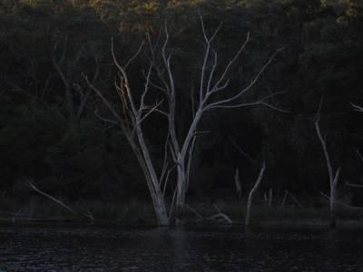 b2ap3_thumbnail_Tree-at-lake-.jpg