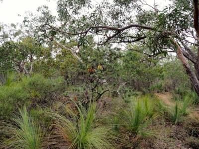 b2ap3_thumbnail_What-the-fuel-reduction-burn-has-killed---photo-showing-a-diverse-range-of-plant-species-now-almost-all-dead.-Photo-Jane-Gibb-.jpg